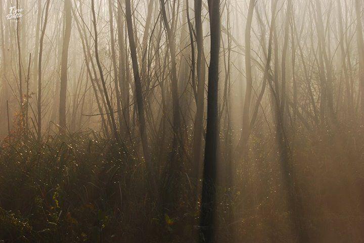 Tigre Delta:  Los tres fotografías que voy a subir son paisajes de mañana, a esa hora que todos duermes o recién comienzan a buscar leña para encender el hogar.