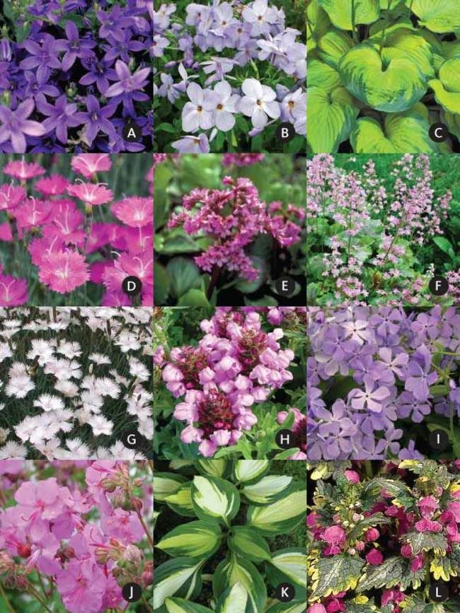 14 varieties 15 plants under a small tree garden garden pre planned