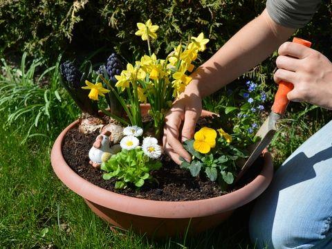 Tak sme sa konečne dočkali - máme tu vytúženú jar a s ňou aj krásne slniečkové dni. Samozrejme, ešte to nie je tá nádherne rozkvitnutá a farebná jar, ktorá nás vábi a opája množstvom rozkvitnutých kvetín, ale ak sa už nevieme dočkať, môžeme si jarnú minizáhradku veľmi rýchlo vykúzliť vo väčšom črepníku alebo košíku, do ktorého už stačí len umiestniť a naaranžovať pekné jarné kvety zo záhradníctva!