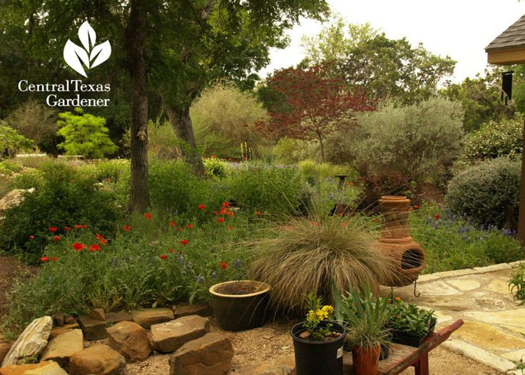 33 best drought friendly front yard images on pinterest