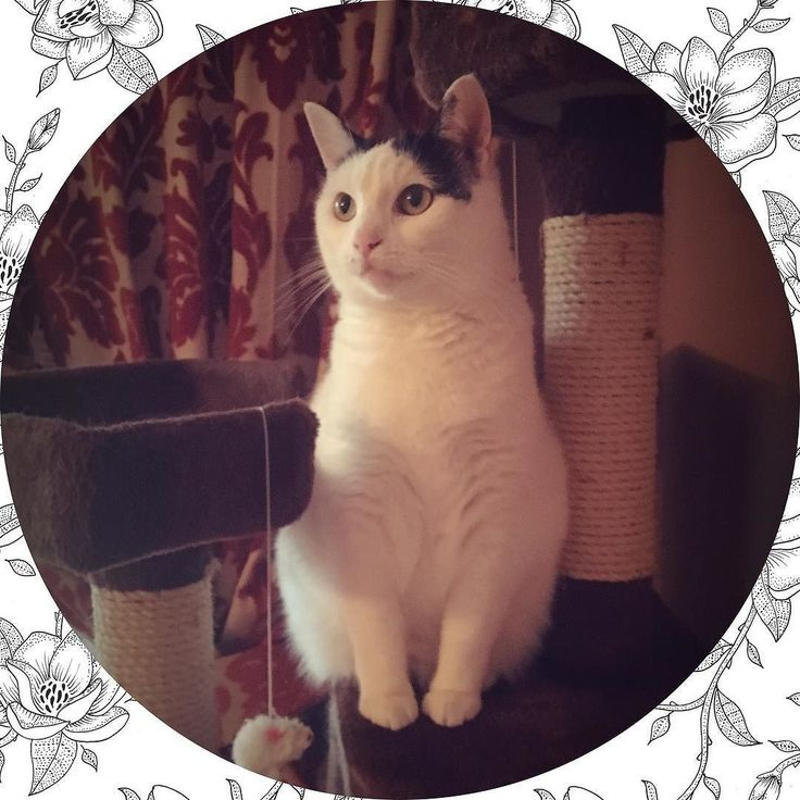 | #love #cat #cats #sweet #netherlands #fashionblogger #dutch
