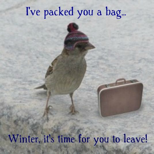 Winter go away.  quotes and signs  Pinterest  Ontario, Happy spring and Th...