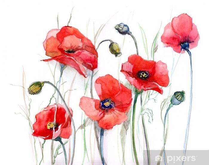 Poppy Wall Mural Pixers We Live To Change Watercolor