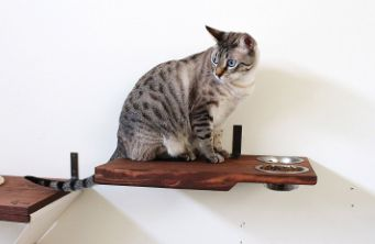 Your Cat Wants to Climb, Don't You Want To Make Them Happy? http://www.catwallshelves.net