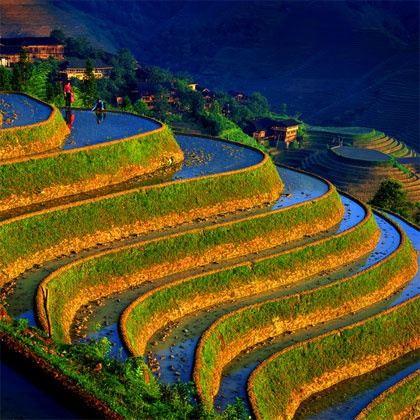 Rice Fields in China: Terrace, Rice, Fields Flowers, Beautiful Landscape, Dragon,  Labyrinths, Amazing Places, Maze, Photo