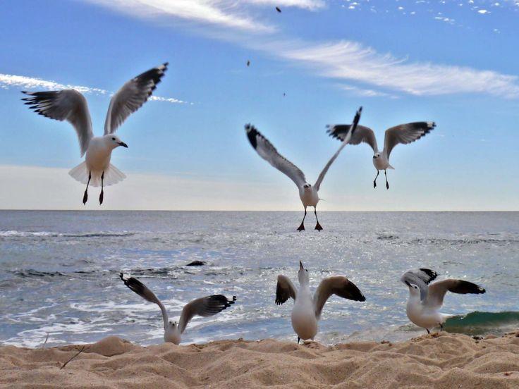 Seagulls, Flying, Ocean, Beach, Sea, Clouds, Blue Sky