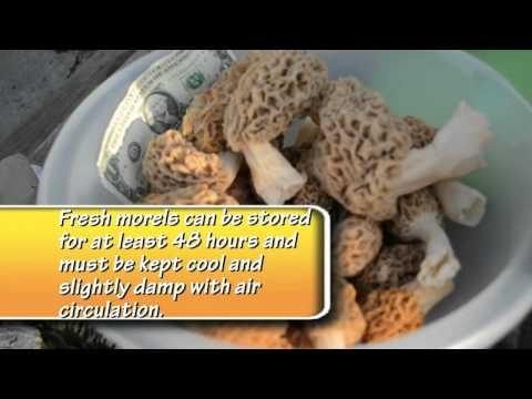 33 best funktified food images on pinterest cooking for Morel mushroom recipes food network