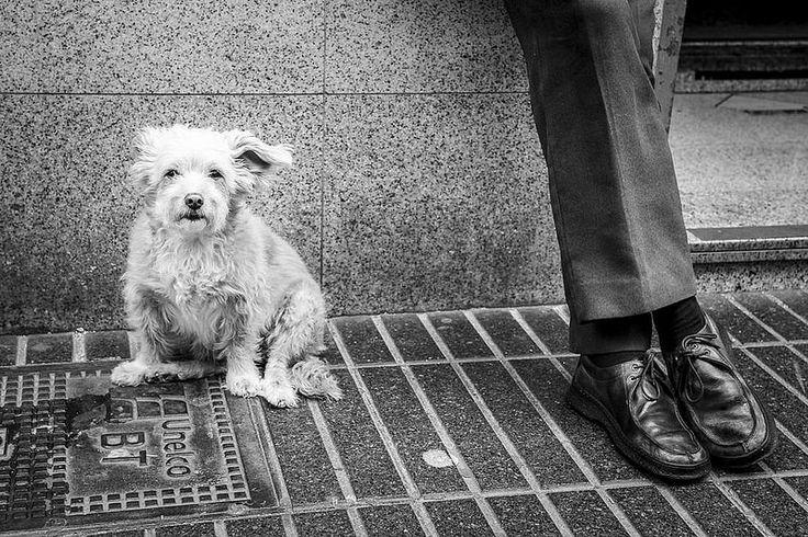 {Un perro} #enotrapiel #photography #lifestyle #streetphoto
