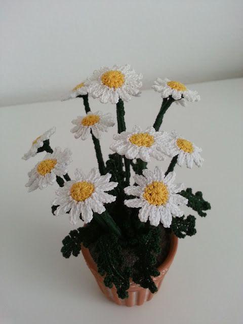 51 best images about piante grasse all 39 uncinetto on for Il blog di sam piante grasse
