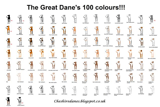 cheshire danes     the great dane u0026 39 s 100 colors chart