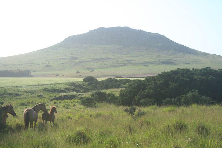 LOBERIA, Campo, sierras y caballos. Cerro EL BONETE