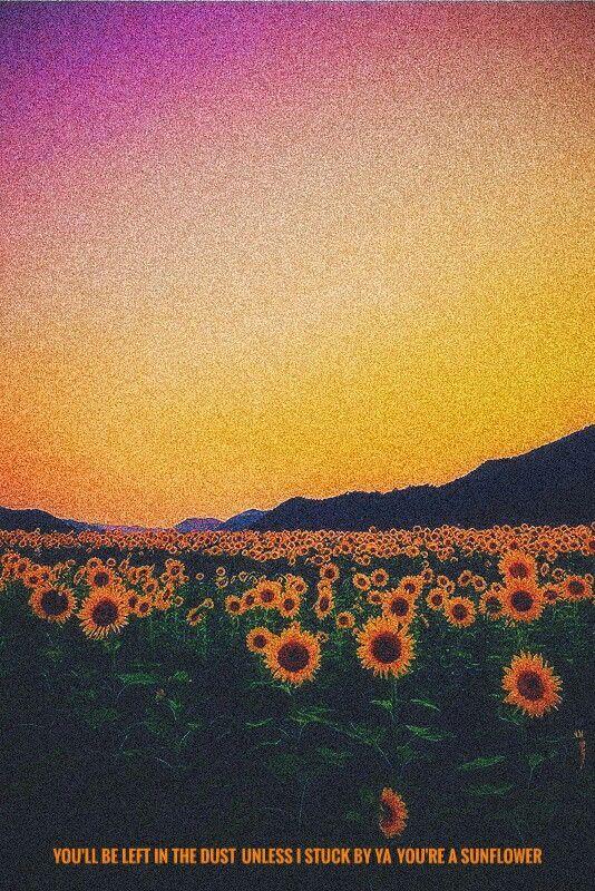 Post malone , Sunflower | Post malone lyrics, Post malone ...
