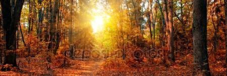 Descargar - Autumn Forest Panorama — Imagen de stock #5014553