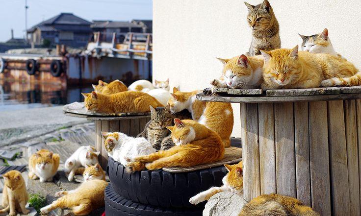Tashirojima Island in Ishinomaki City located east of Sendai City is known as the 'Cat Island'