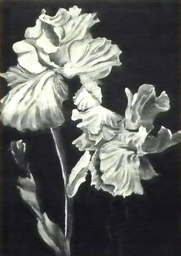 Iris, White pastel on black paper
