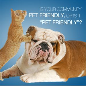 Pet friendly marketing for apartments