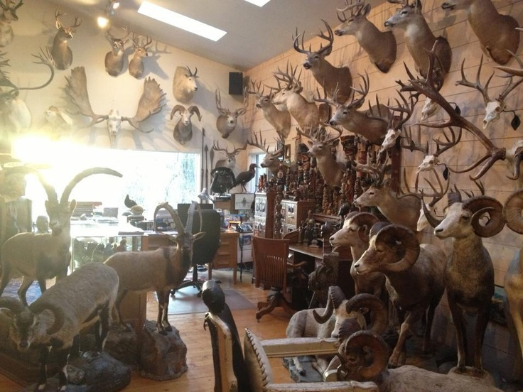 Deer Hunting Man Cave Ideas : Jim shockey s trophy room a girl can dream to someday