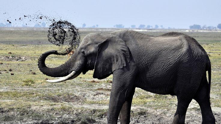 Download Wallpaper 1920x1080 elephant, dirt, splash, walk ...