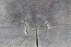Tree Trunk Showing Growth Rings - Wall Mural & Photo Wallpaper - Photowall