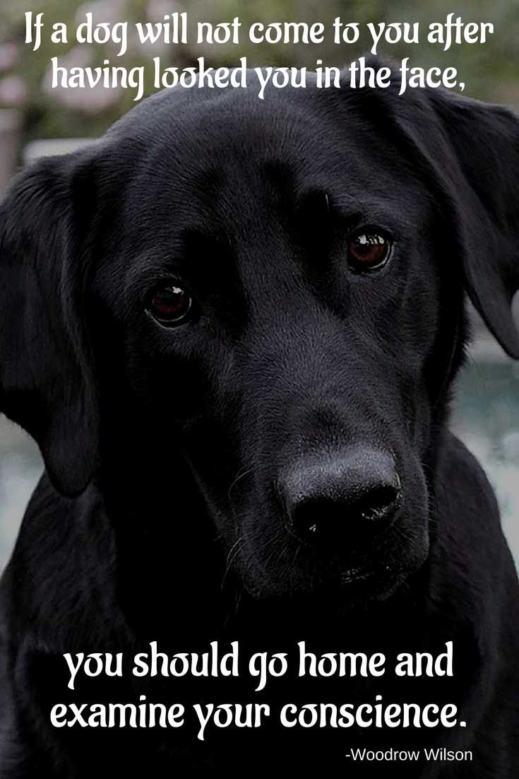 Are These Dog Quotes About Me And My Dog In 2020 Dog Quotes Labrador Retriever Labrador Retriever Quotes