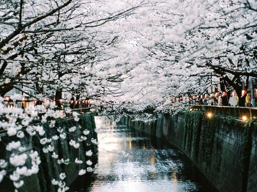 tokyo - i think this is next to a restaurant a friend brought me to. glorious in spring...
