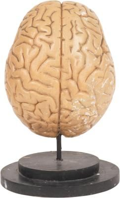 Frontal lobe strengthening exercises