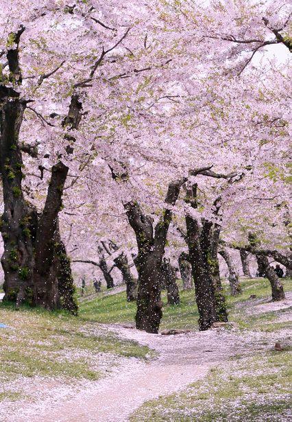 Goryokaku Park, Hokkaido, Japan: photo by M.Yoshida