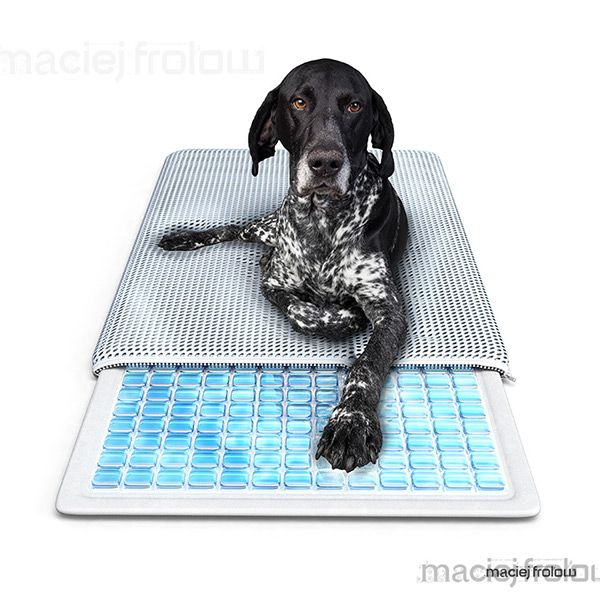 Healing pet`s bed, cooling gels with dog lying on.