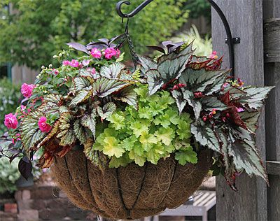 Planter Idea Book, Container Gardens, Pots, Planters, Windowboxes, Hanging Baskets