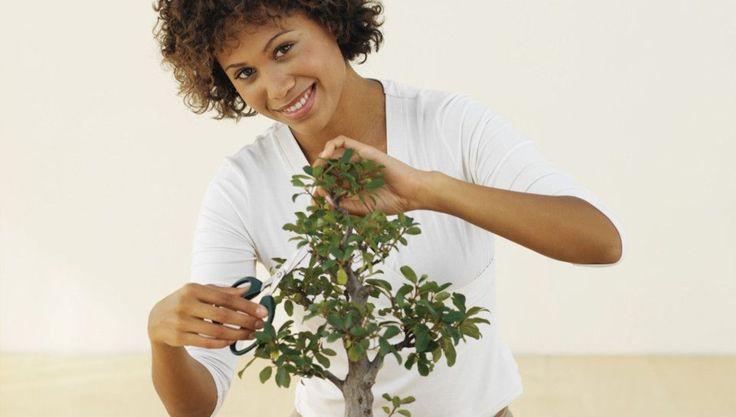 bonsai schneiden die wichtigsten tipps hobby pinterest bonsai bonsai baum und baum schneiden. Black Bedroom Furniture Sets. Home Design Ideas