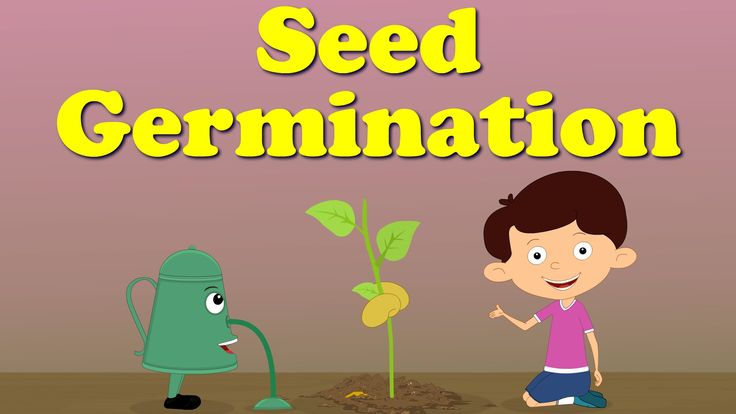 "You will learn about ""Seed Germination"" in this video. The life of a plant begins from a tiny seed. The seed is protected by an outer covering called a seed ..."