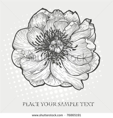 vector hand drawn  illustration of a single peony                                                                                                                                                                                 Plus