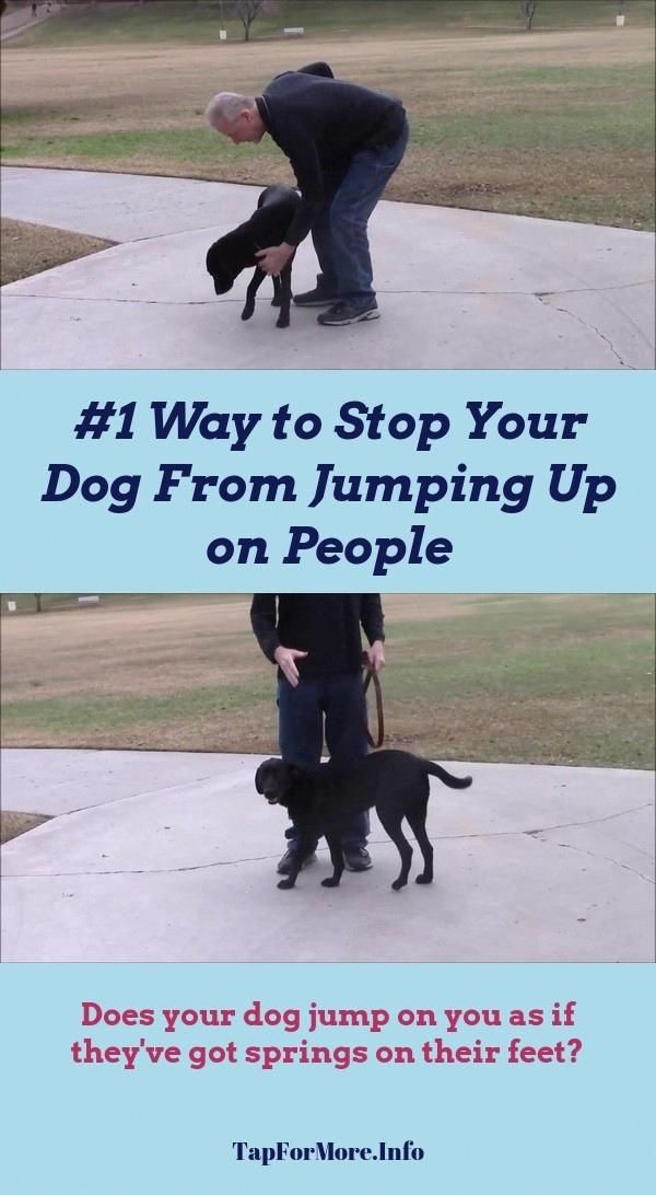 Stop Dog Jumping And Potty Training Puppy Bell Check The Image