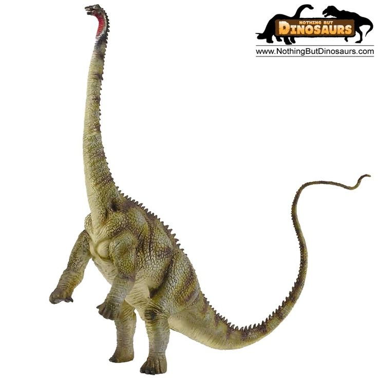 10 best diplodocus images on pinterest dinosaurs - Dinosaure diplodocus ...