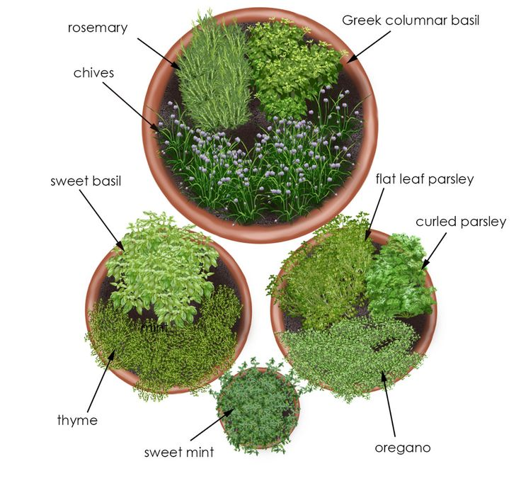 Grow fresh herbs to add flavor to soups, salads, beverages, and more in this simple herb garden designed for containers.