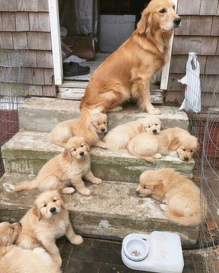 Hermosa familia ❤❤