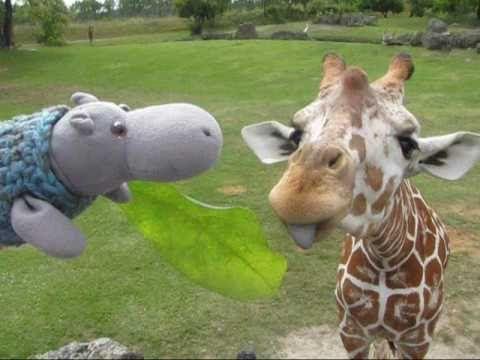 giraffe videos, giraffe photos, giraffe news, giraffe pics | Say OMG