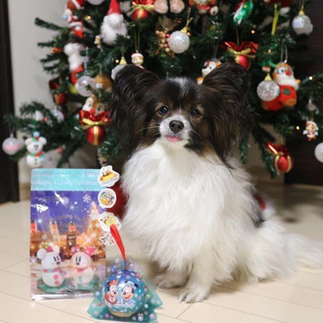 @k.maron0616 さんより お届もの🎁  マリメッコの布を 形にしてあげたお礼にかわいいディズニーのお菓子いただきました❤️ ツリースカート🎄に 飾ろう💝💝 #愛犬#チップ#パピヨン#パピヨン大好き#犬#犬が#癒し犬#犬がいる幸せ#マリメッコ#マリメッコ生地#ハンドメイド#ディズニーシーお菓子#ディズニースノースノー#ありがとうございます#シールが全部チップデール#かわいい