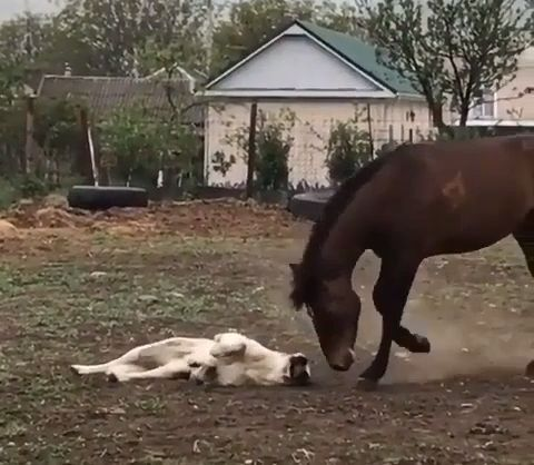 Friendship between dog and horse