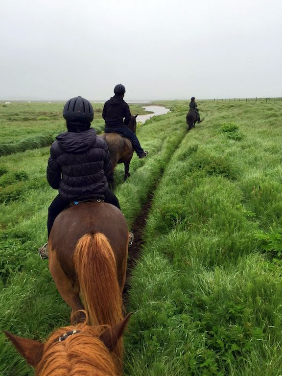 A Horseback Riding Tour in Iceland - The World Is A Book