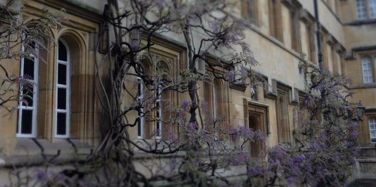 Wisteria in bloom in Univ's Main Quad  univ.ox.ac.uk