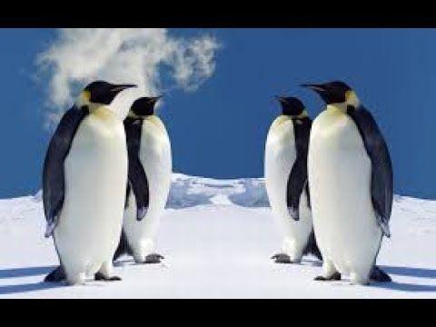 North Pole Documentary