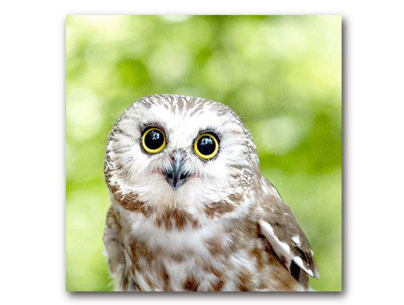 Cute Owl photo woodland animal sawwhet owl by semisweetstudios,