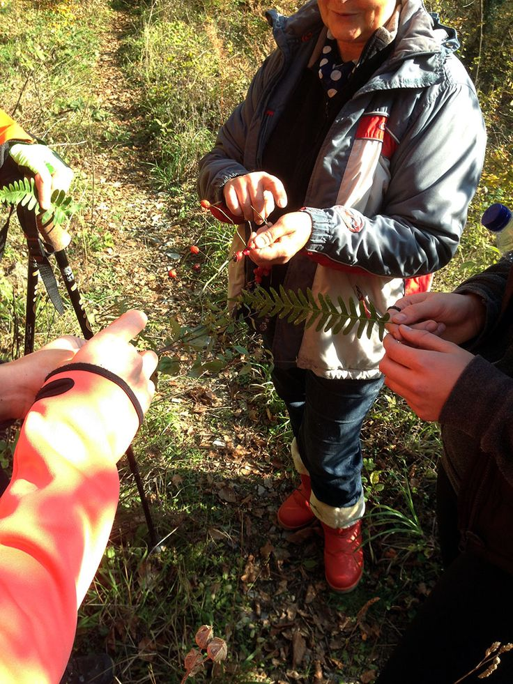Learing the nature with trigiro - Greece #trigiro #tour #hike #botany #nature #feel #northGreece #Greece #travel