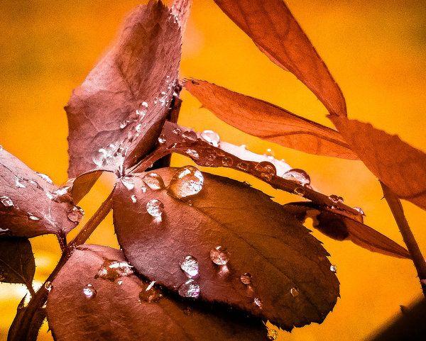 Heart Leaf Autumn HD desktop wallpaper : High Definition : Fullscreen ...