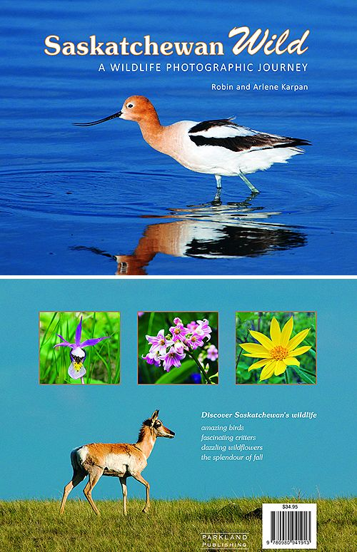 This award-winning hardcover photographic book takes you on an exciting discovery of our amazing birds, fascinating critters, dazzling wildflowers, and the splendour of fall. Saskatchewan is home to some of nature's greatest spectacles. The book is a celebration of wildlife and a reminder of what we'll lose if we aren't careful.