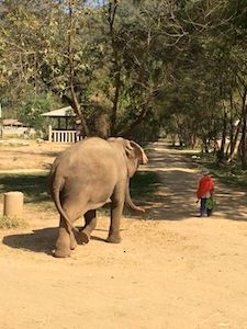 Don't ride elephants in Thailand - they are abused. There's a better way to see elephants that let's you play, feed, and bathe them without doing them harm.