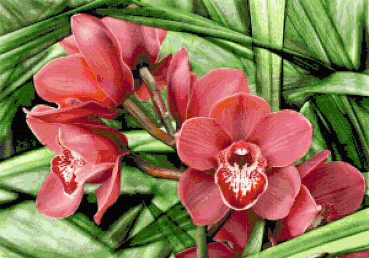 Orchid - free cross stitch pattern