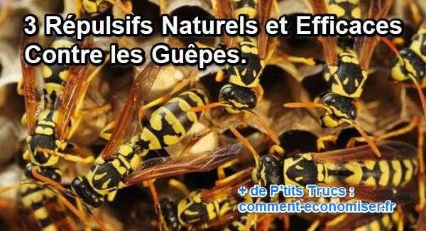 Les 251 meilleures images du tableau anti insectes et anti - Lutter contre les mites ...