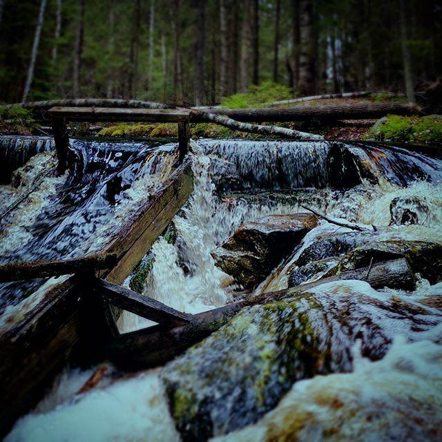 Finnish nature during spring time. Part 8 #finland #nature  #spring #beautiful #suomenkevät #luonto #luontokuva #kaunista #aamu #winled #winledlighting #woodland #metsä #suomi #suomenluonto #kevät #koski #puro #metsäretki #metsässä #mylly #forest #myllykoski